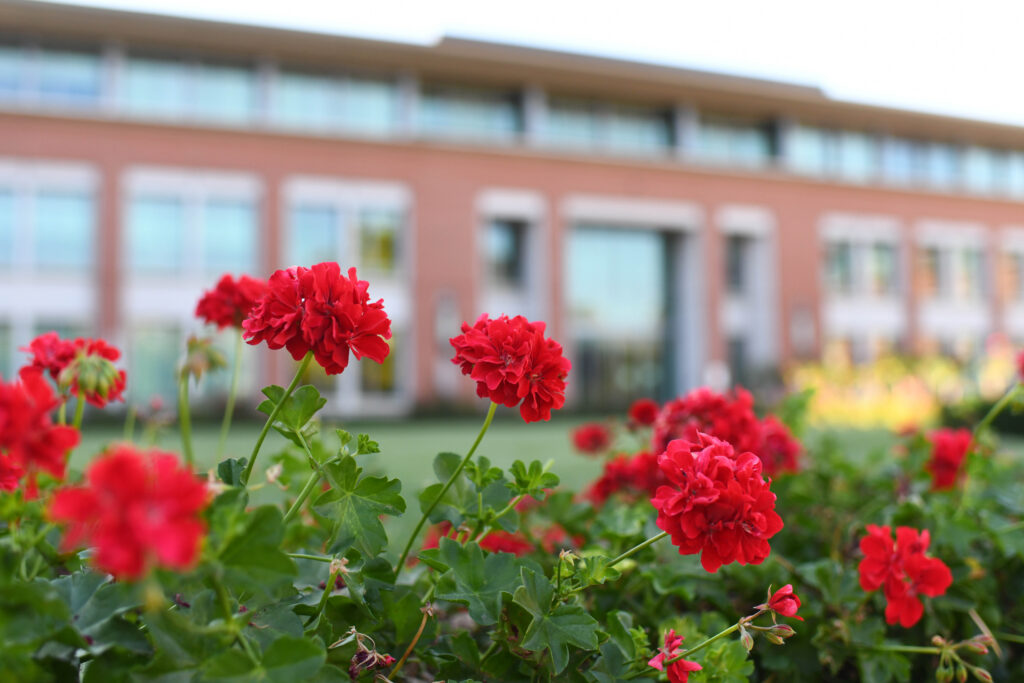 A bed of red flowers in front of a brick building